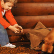 Selecting the Right Wood for a Log Home
