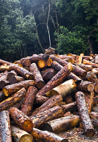 logging operation underway