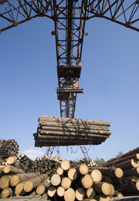 overseas logging process