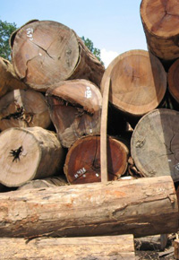 Pile of Ipe logs