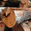 "If the Price for Lumber Seems ""Too Good To Be True,"" It Probably Is"