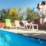 dog jumping into pool for a swim
