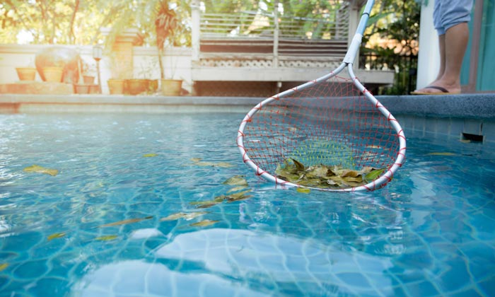 leaves in pool water being scooped by net