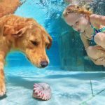 young girl underwater swimming with dog