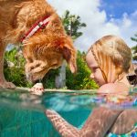 dog and young girl studying seashell in pool