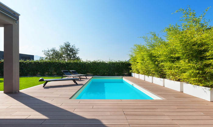 backyard inground pool with hedges for walls